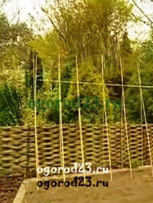 Шпалера из бамбука