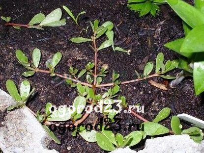 борьба с сорняками 16
