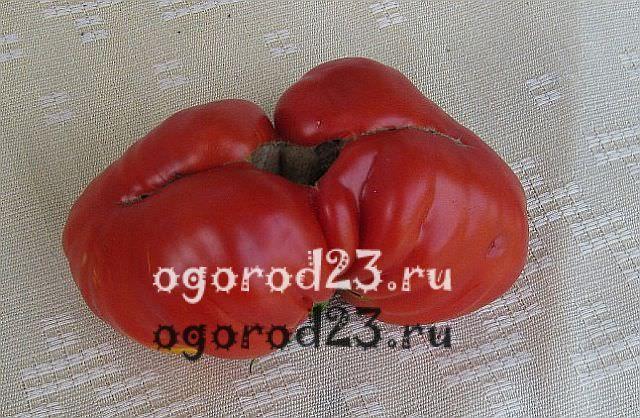 пасынкование помидоров 4