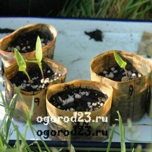 посев семян на рассаду 3