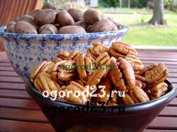 Орехи пекан польза