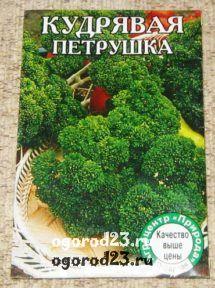 выращивание петрушки 9