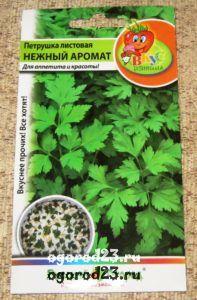 выращивание петрушки 6