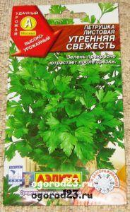 выращивание петрушки 7