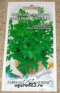выращивание петрушки 5