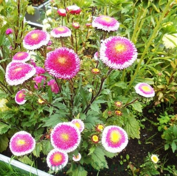 цветы для букета названия и фото 14