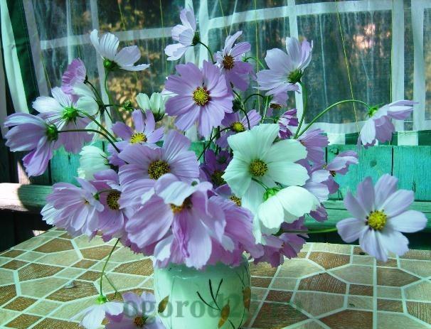 цветы для букета названия и фото 17