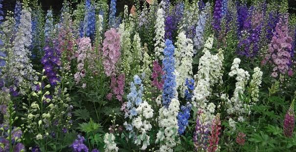 цветы для букета названия и фото 2