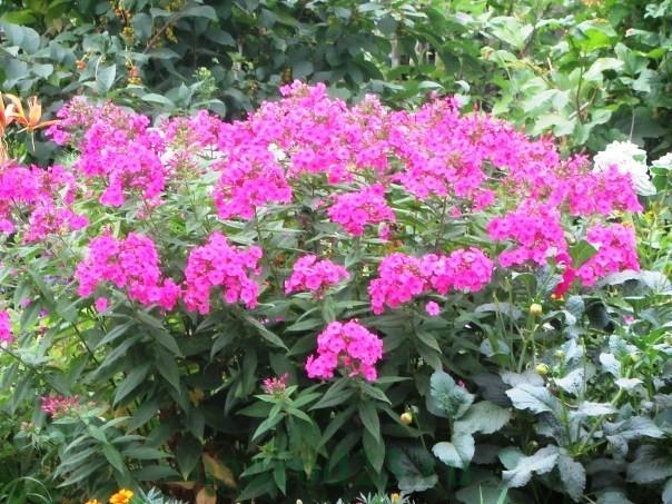 цветы для букета названия и фото 9