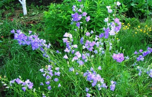 цветы для букета названия и фото 3