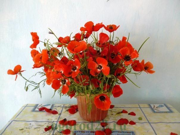 цветы для букета названия и фото 19