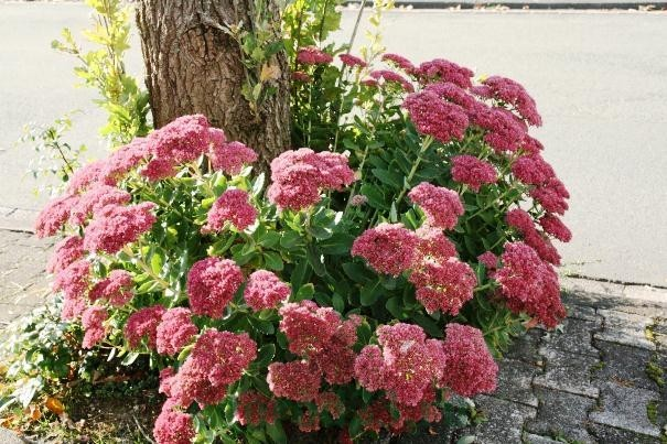 цветы для букета названия и фото 12