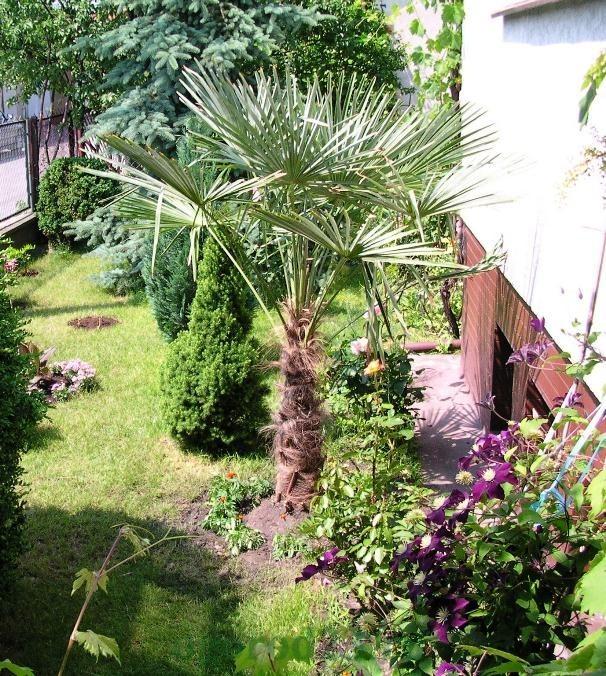 драцена пальмы комнатные фото названия уход в домашних условиях