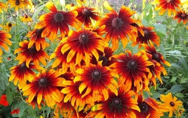 цветы для букета названия и фото 11