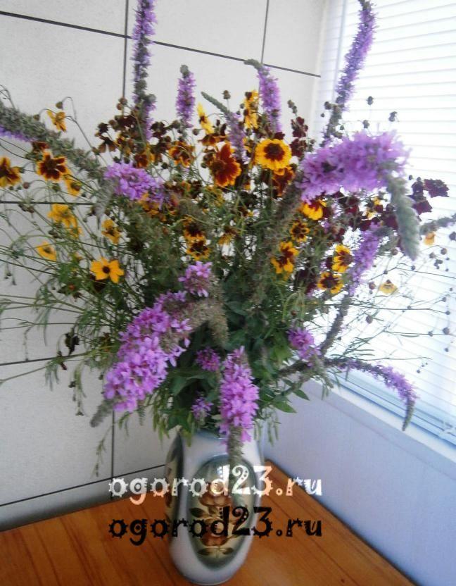 цветы для букета названия и фото 18