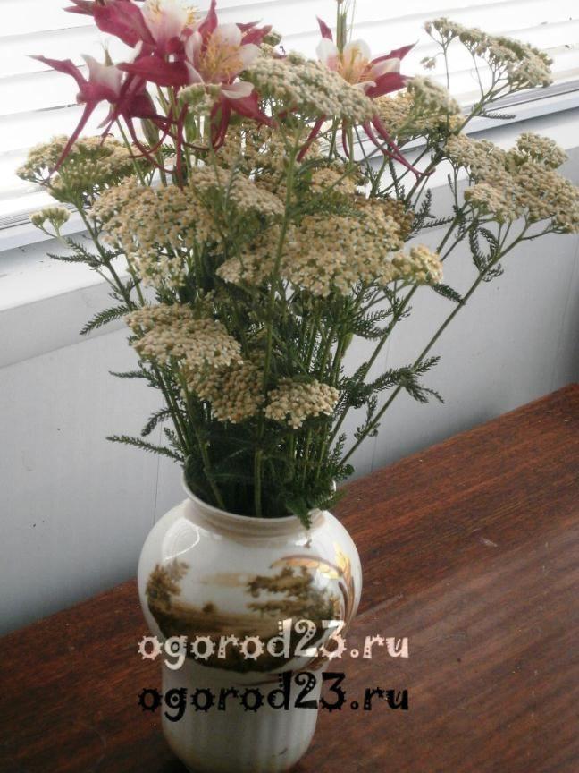 цветы для букета названия и фото 16