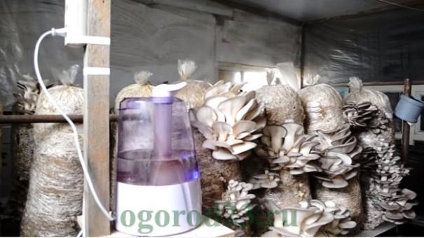 Гараж для выращивания грибов