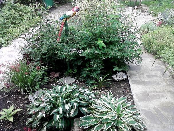 дизайн садового участка своими руками фотогалерея 15