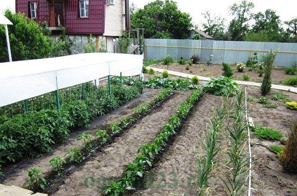 дизайн садового участка своими руками фотогалерея 4
