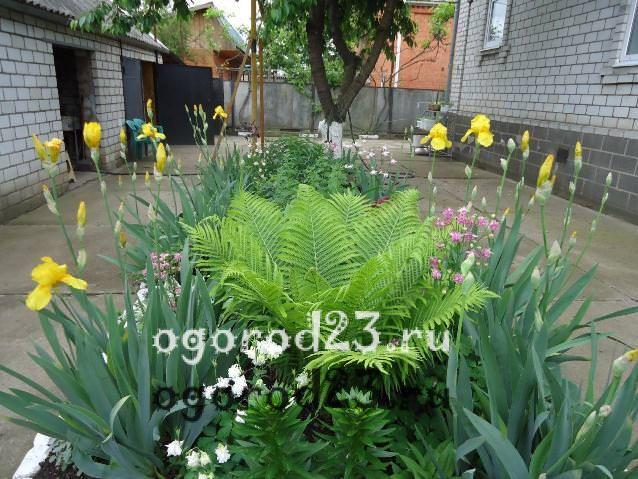 Дизайн садового участка своими руками – фотогалерея 203