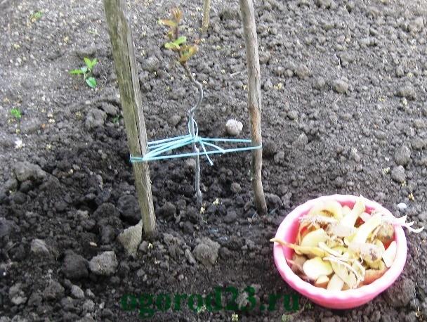 картофельные очистки как удобрение, для каких растений