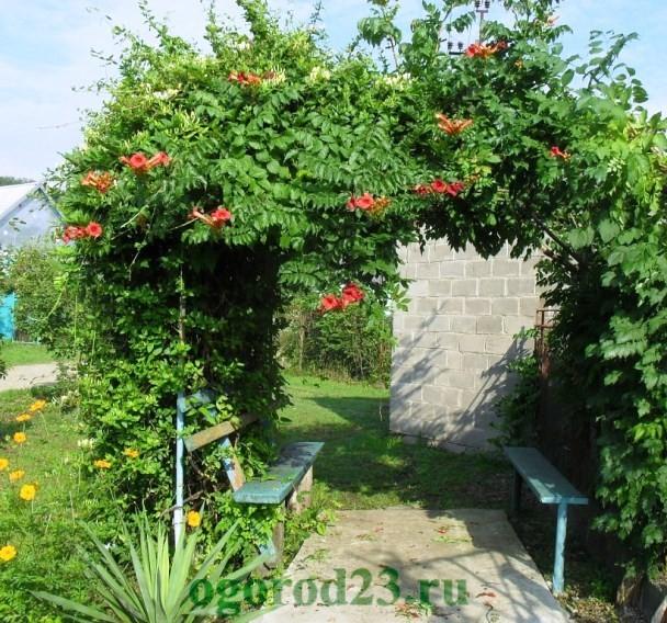 арки для цветов на даче 14