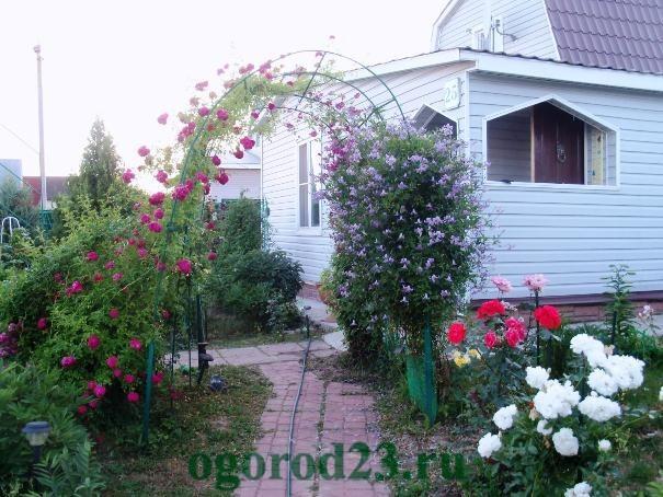арки для цветов на даче 8