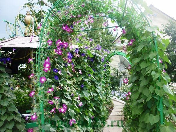 арки для цветов на даче 21