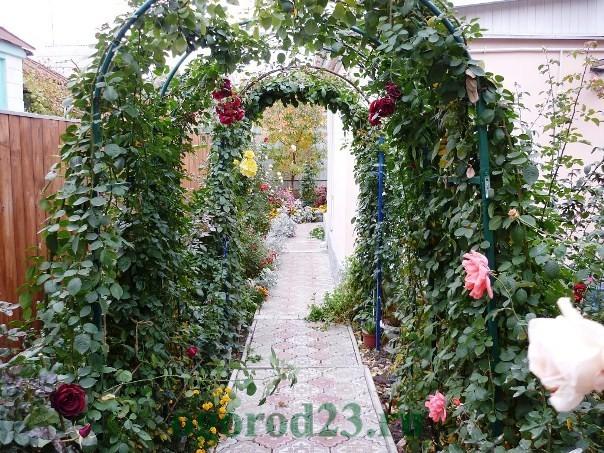 арки для цветов на даче