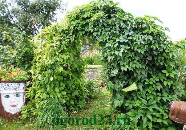 арки для цветов на даче 10