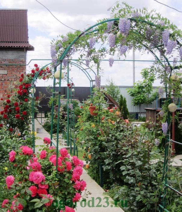 арки для цветов на даче 18