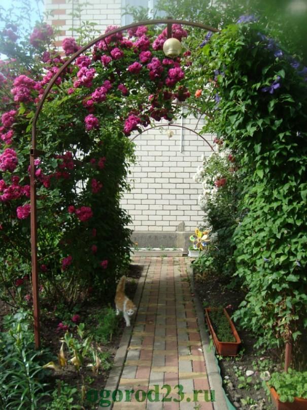 арки для цветов на даче 23