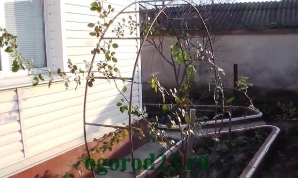 арки для цветов на даче 4