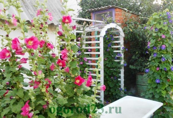 арки для цветов на даче 33