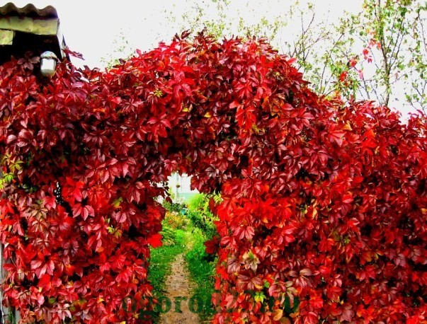 арки для цветов на даче 11