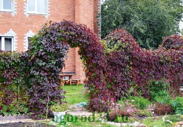 арки для цветов на даче 13
