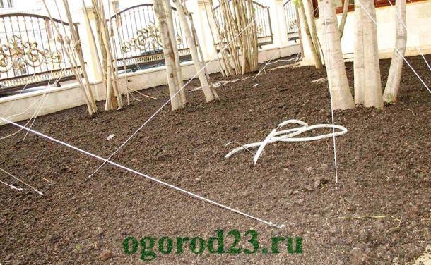 Как сделать газон на даче своими руками 7