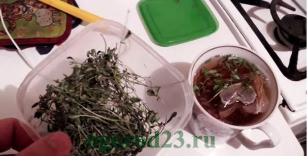 Чабрец - лечебные свойства и противопоказания 3