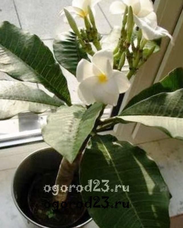 комнатные растения, которые нельзя держать дома – фото и названия 17