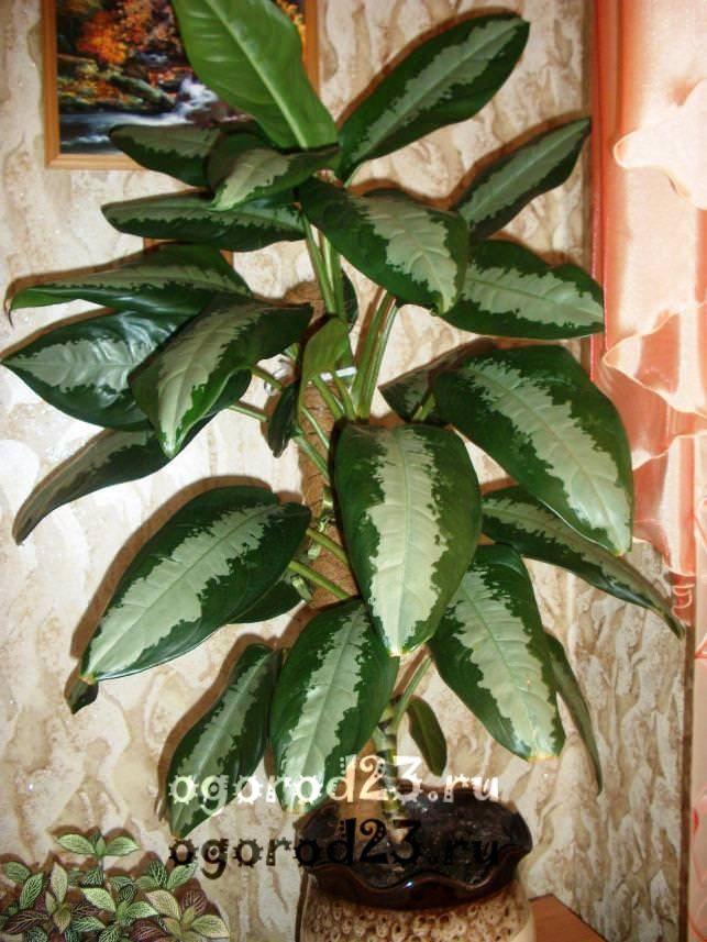 комнатные растения, которые нельзя держать дома – фото и названия 13