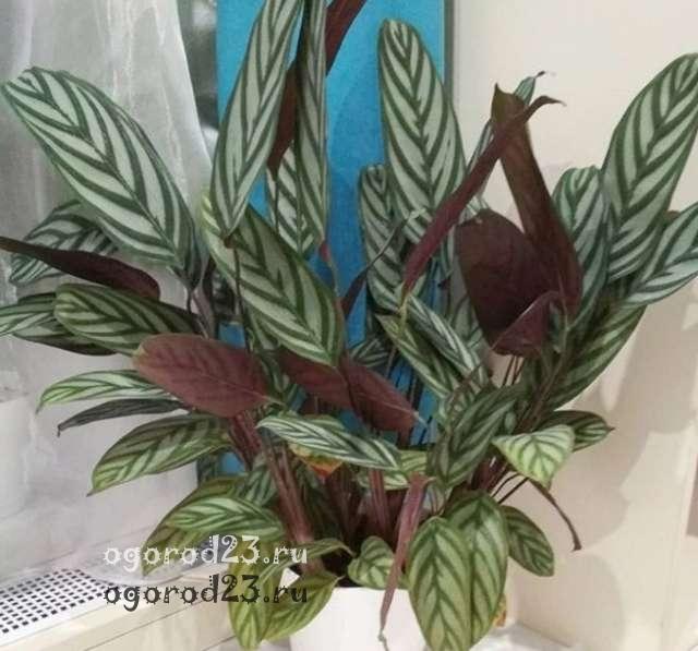 комнатные растения, которые нельзя держать дома – фото и названия 54