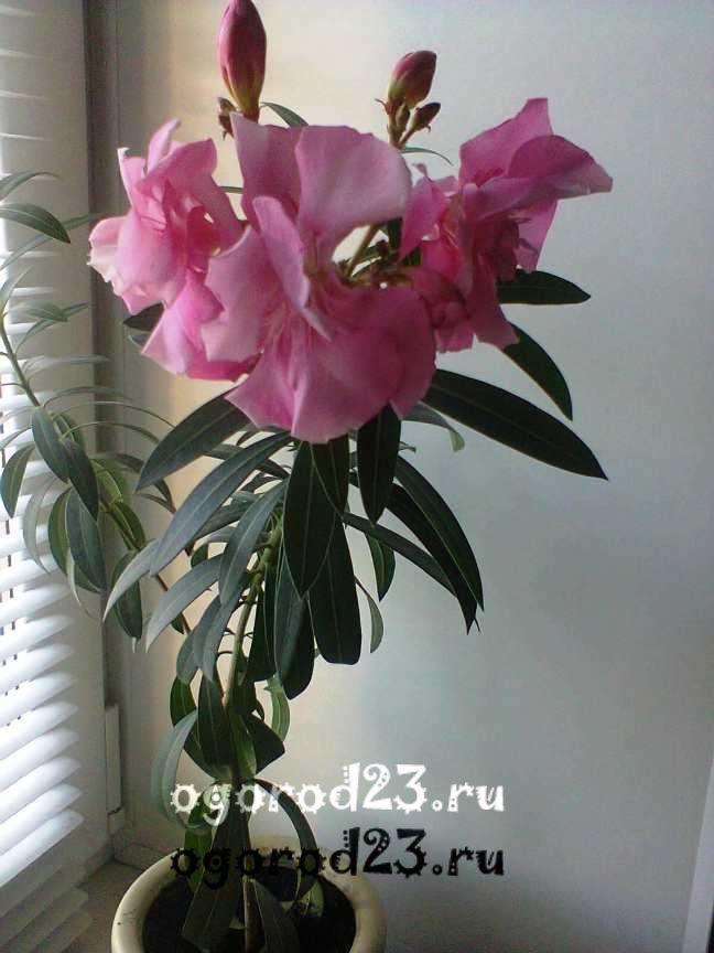 комнатные растения, которые нельзя держать дома – фото и названия