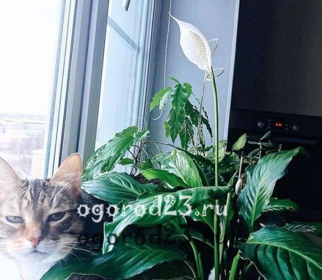 комнатные растения, которые нельзя держать дома – фото и названия 53