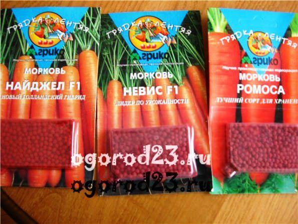 как лучше сажать морковь 1