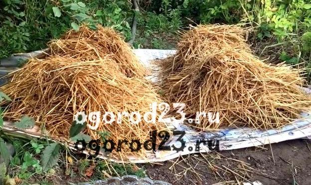 Выращивание шампиньонов в домашних условиях для новичков 4
