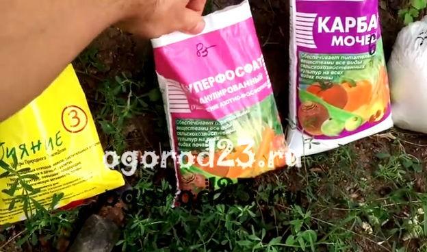 Выращивание шампиньонов в домашних условиях для новичков 6