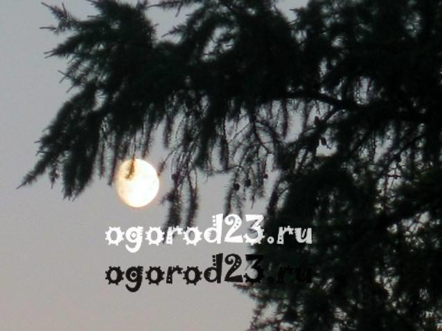 луна в мае