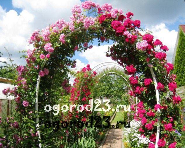 Декоративные кустарники для дачи, фото и названия 2
