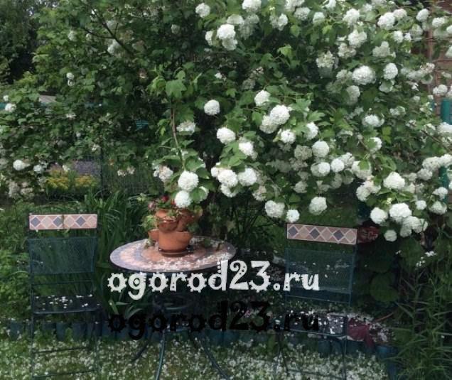 Декоративные кустарники для дачи, фото и названия 13