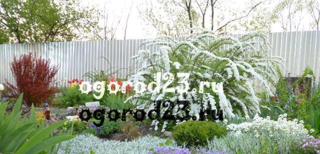 Декоративные кустарники для дачи, фото и названия